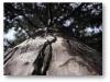 foto02-drevo